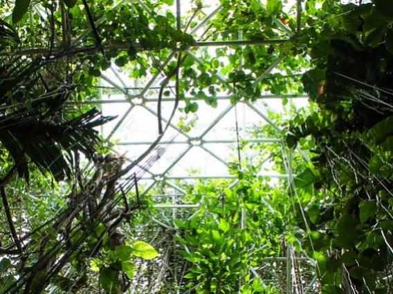 vines in biosphere 2