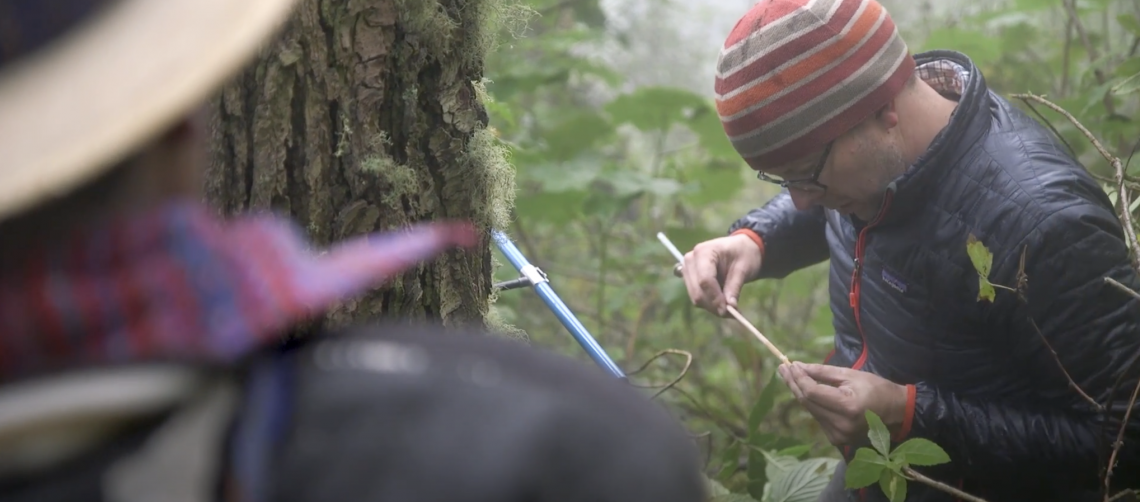 man collecting sample from tree trunk
